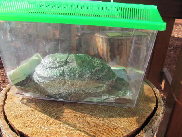 Tree Trek Frog - End of Summer Sep 2013