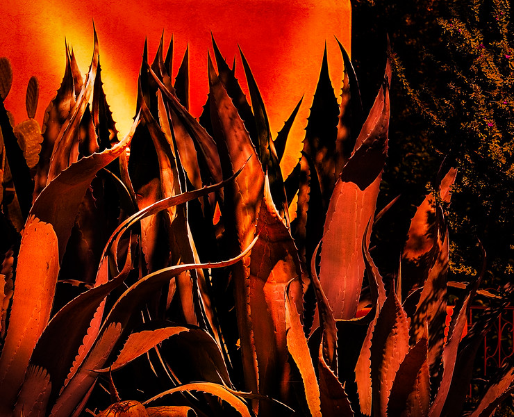 Photo 332 of 365 - Agave Flames!