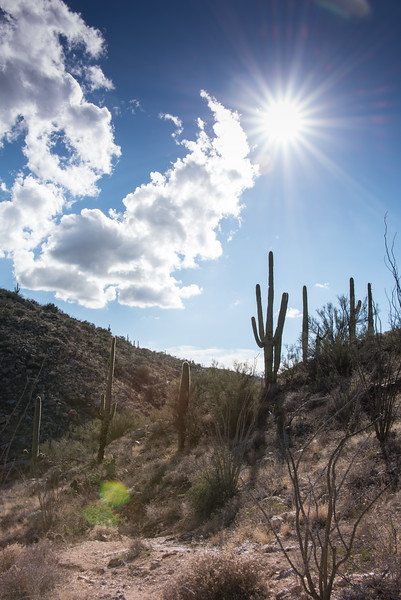 Photo #11 of 365 - Hiking Redington