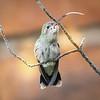 Photo #209 of 365 - Hummingbird with Attitude!