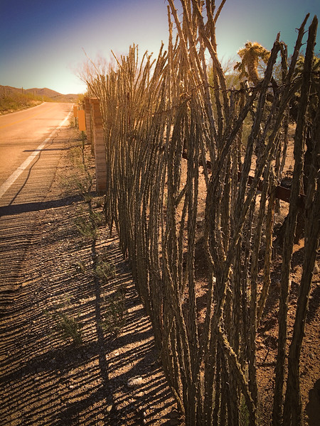 Photo #68 of 365 - Ocotillo Lines of Perfection