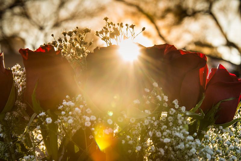 Photo #239 of 365 - Good Morning Sunshine!