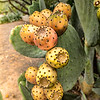 Photo #205 of 365 - Prickly Pear Fruit!