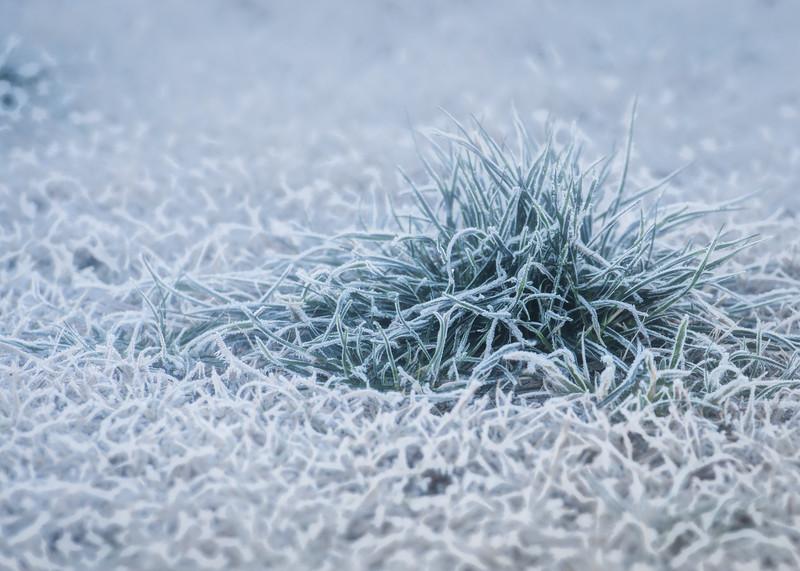 Photo 347 of 365 - Frosty Grass!