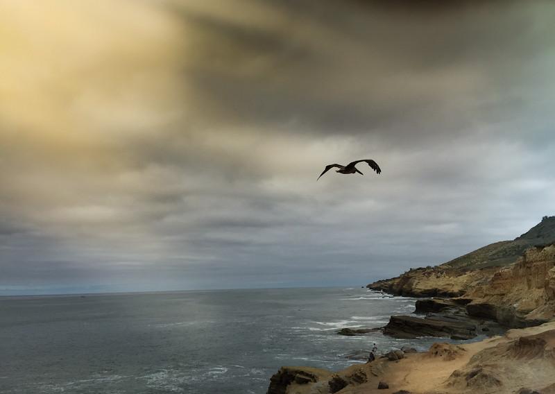 Photo #193 of 365 - Soar Like a Sea Gull