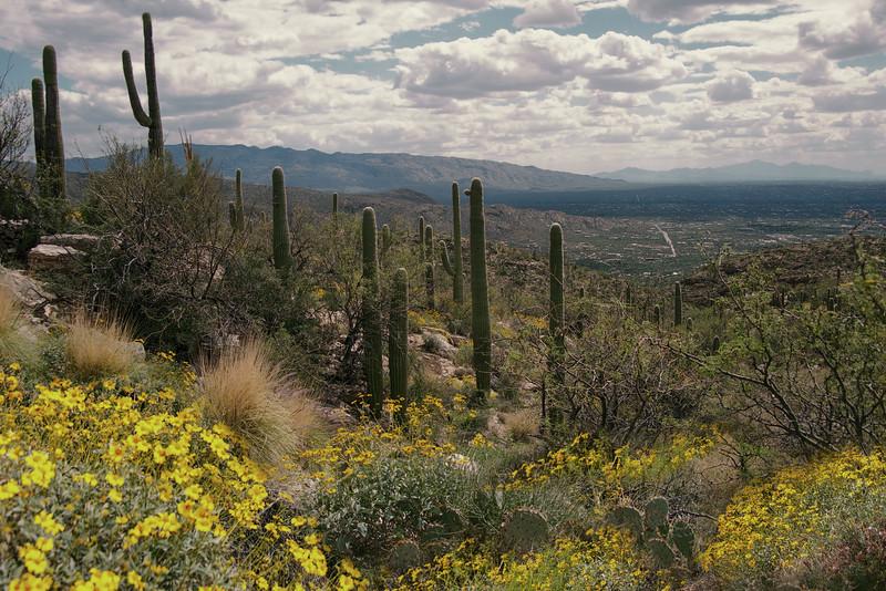 Photo #72 of 365 - Mt Lemmon Wild Flowers