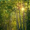 Photo #173 of 365 - Backlit Forest