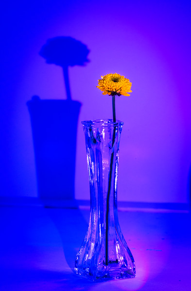 Photo #266 of 365 - Lighting Effects!