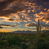 Photo #257 of 365 - Arizona Love