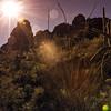 Photo #255 of 365 - Sunrise Hike!