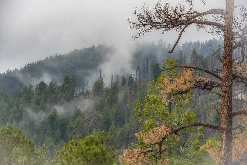 Photo #278 of 365 - Cloudy Mt Lemmon this morning!