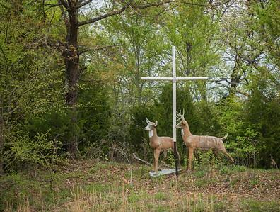April 17, 2015. Deer crossing