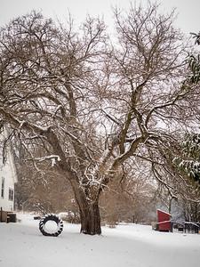 January 3, 2015. Big swing, big tree