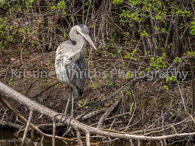 5.7.2016 Ruffled feathers