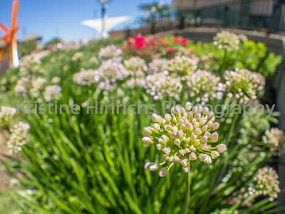 6.28.2016 Fisheye flowers
