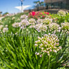 6.28.2016 Fisheye flowers