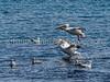 6.16.2017 Water landing