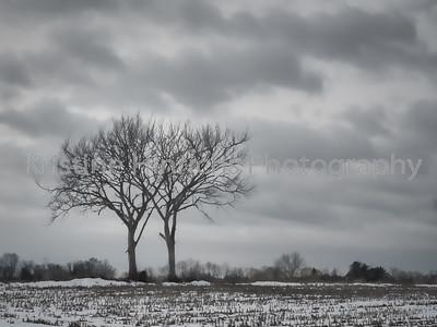 12.31.2016 Winter sky
