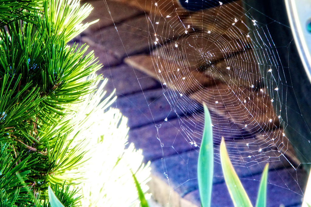 sep12-spiderweb