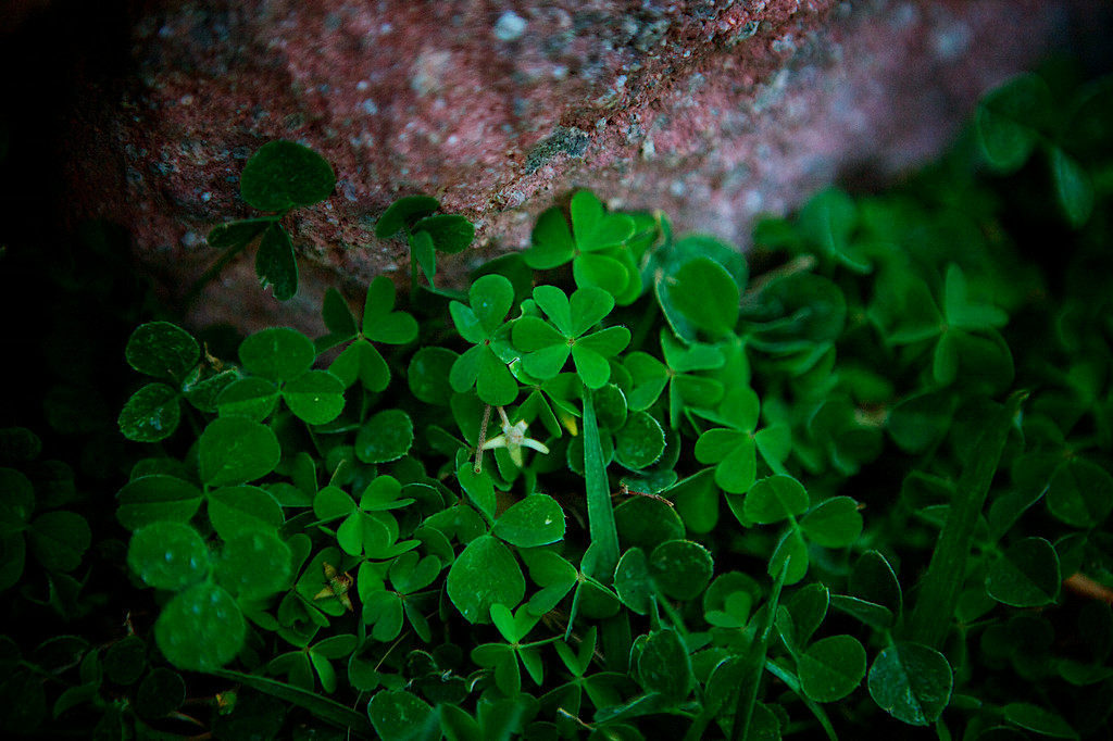 apr12-green-clover