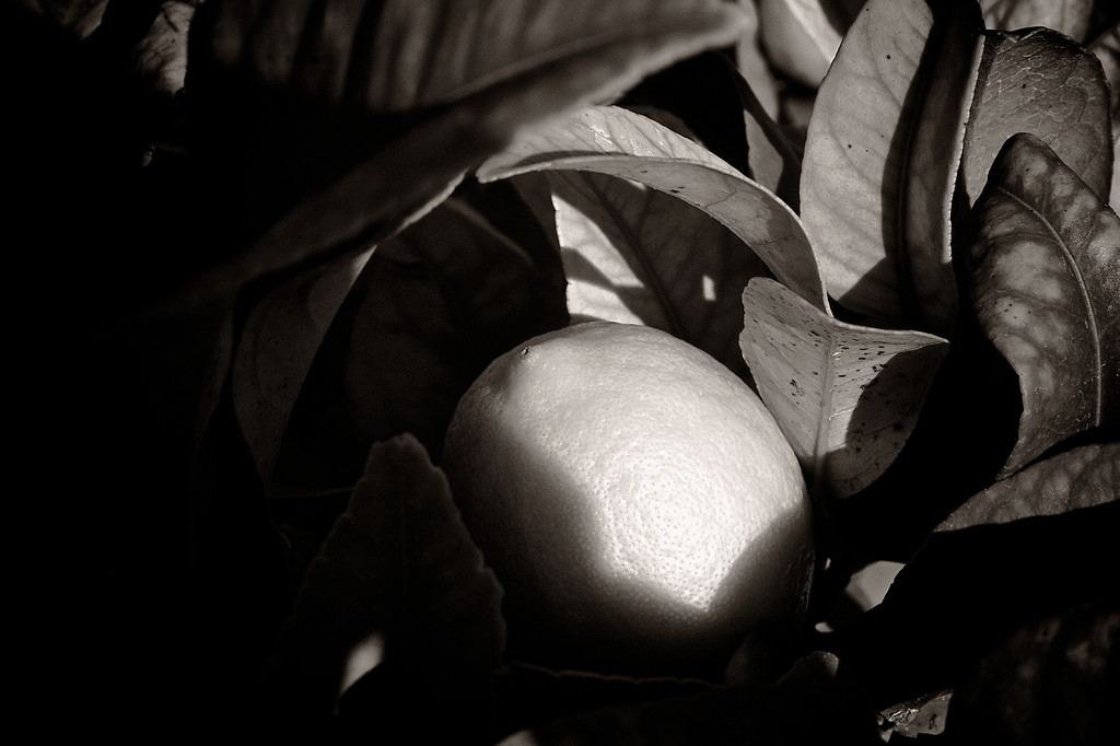 aug12-lemon-light-sepia