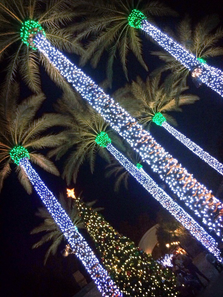 Palms all lot up for Christmas at the Princess.  <br /> <br /> Day 347 of 365<br /> 12-13-2013
