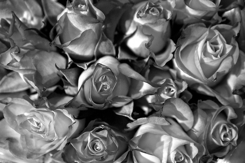 My wife bought the cool bunch of roses at the store today and I really liked how the textures looked in B&W.... I did do a bit of dodging and burning to add a bit of depth.... <br /> <br /> Day 52 of 365<br /> 02-21-2013