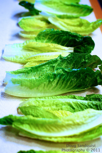 Lettuce, went to my mom's house for dinner tonight and found these leaves of lettuce fresh out of the salad spinner! I liked the color and the textures... <br /> <br /> 07-27-2011