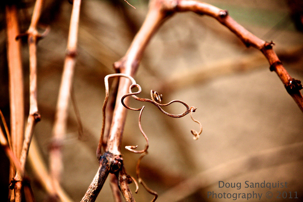 "Grapevines awaiting spring...   I took a few shots of this a day or so ago(<a href=""http://www.sandquistphotography.com/Photography/Photo-a-Day-Extras/15460654_Rortg#1157516185_HVYyP"">Can be seen here...</a>) and liked the way it turned out, so I decided to try shooting it again, but tried to get closer to capture more detail...."