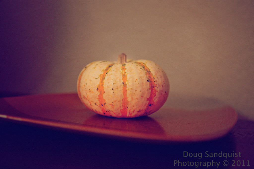 It's October, so its pumpkin time! I liked the soft tones of this image. <br /> <br /> 10-24-2011