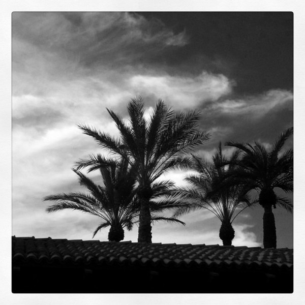 I liked these palm trees against the wispy clouds in the sky... Processing all done with an Instagram filter on my iphone.. <br /> <br /> 06-03-2011