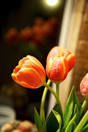 tulips in the widow!...   12-12-2011