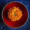 Red Bowl Series - Orange Marigold