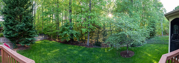 A panorama of green