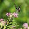 August 8, 2017 - Day 359, Butterfly