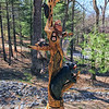 Carved Tree in Berkeley Springs, WV