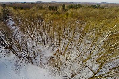 Tall Thin Trees in Snow 2 : Aerial Photography from Project Aerospace