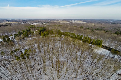 Tall Thin Trees in Snow 3 : Aerial Photography from Project Aerospace