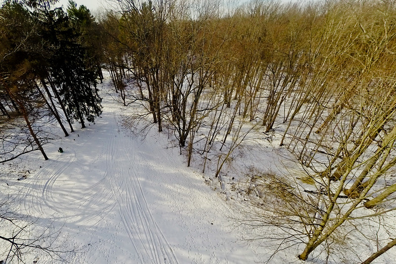 Tall Thin Trees in Snow 7 : Aerial Photography from Project Aerospace