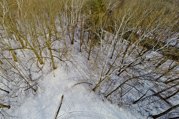 Tall Thin Trees in Snow 5 : Aerial Photography from Project Aerospace