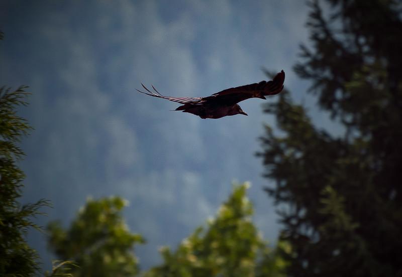Forest Flight