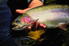 Fat Lees Ferry rainbow.