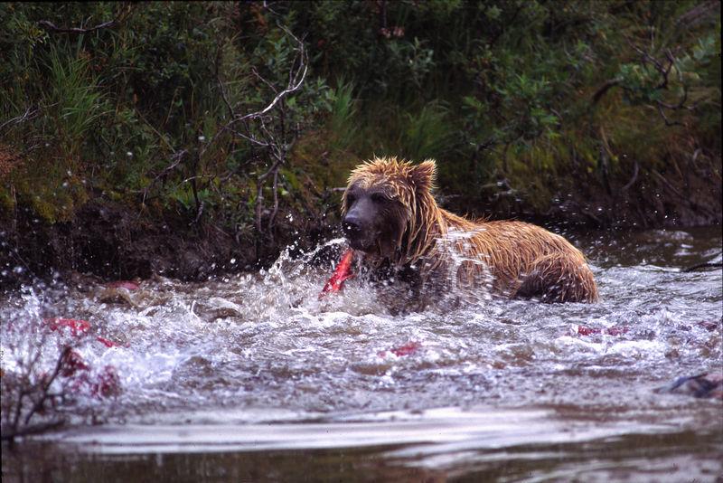 105mm Bear