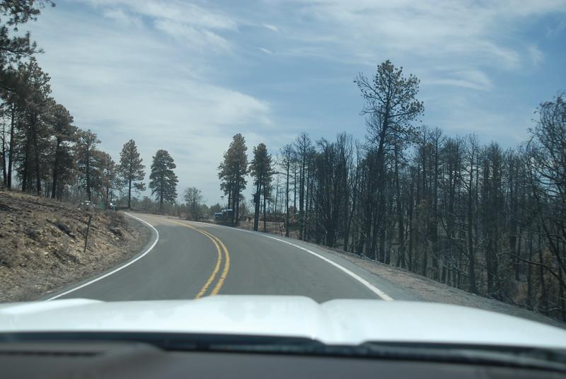 Crews removing trees