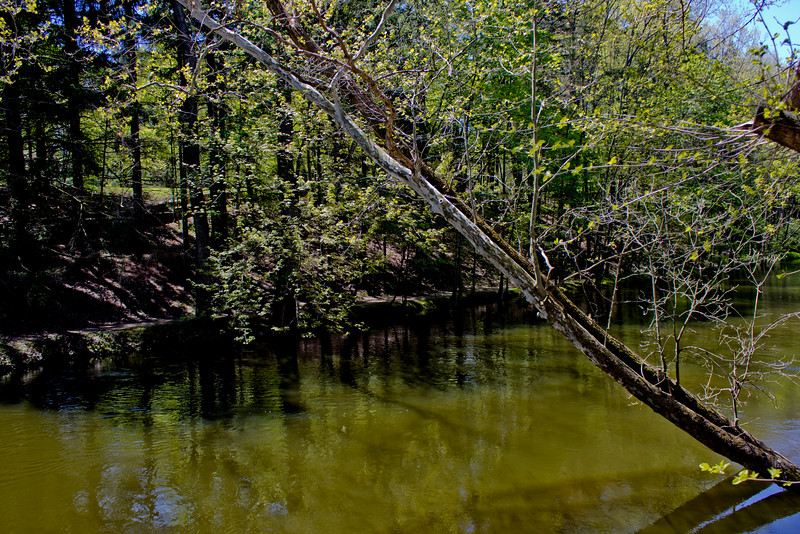 Richfield County Park in Michigan 26