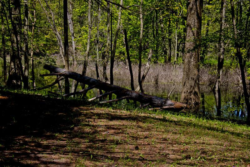 Richfield County Park in Michigan 36