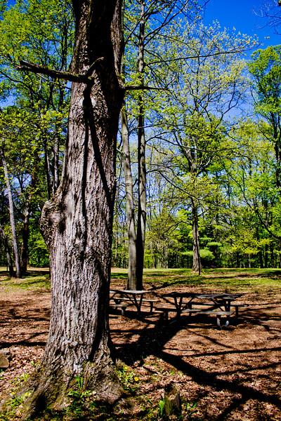 Richfield County Park in Michigan 3