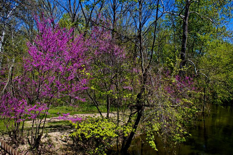 Richfield County Park in Michigan 24