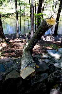 Richfield County Park in Michigan 15