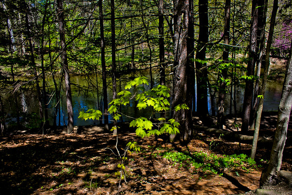 Richfield County Park in Michigan 13